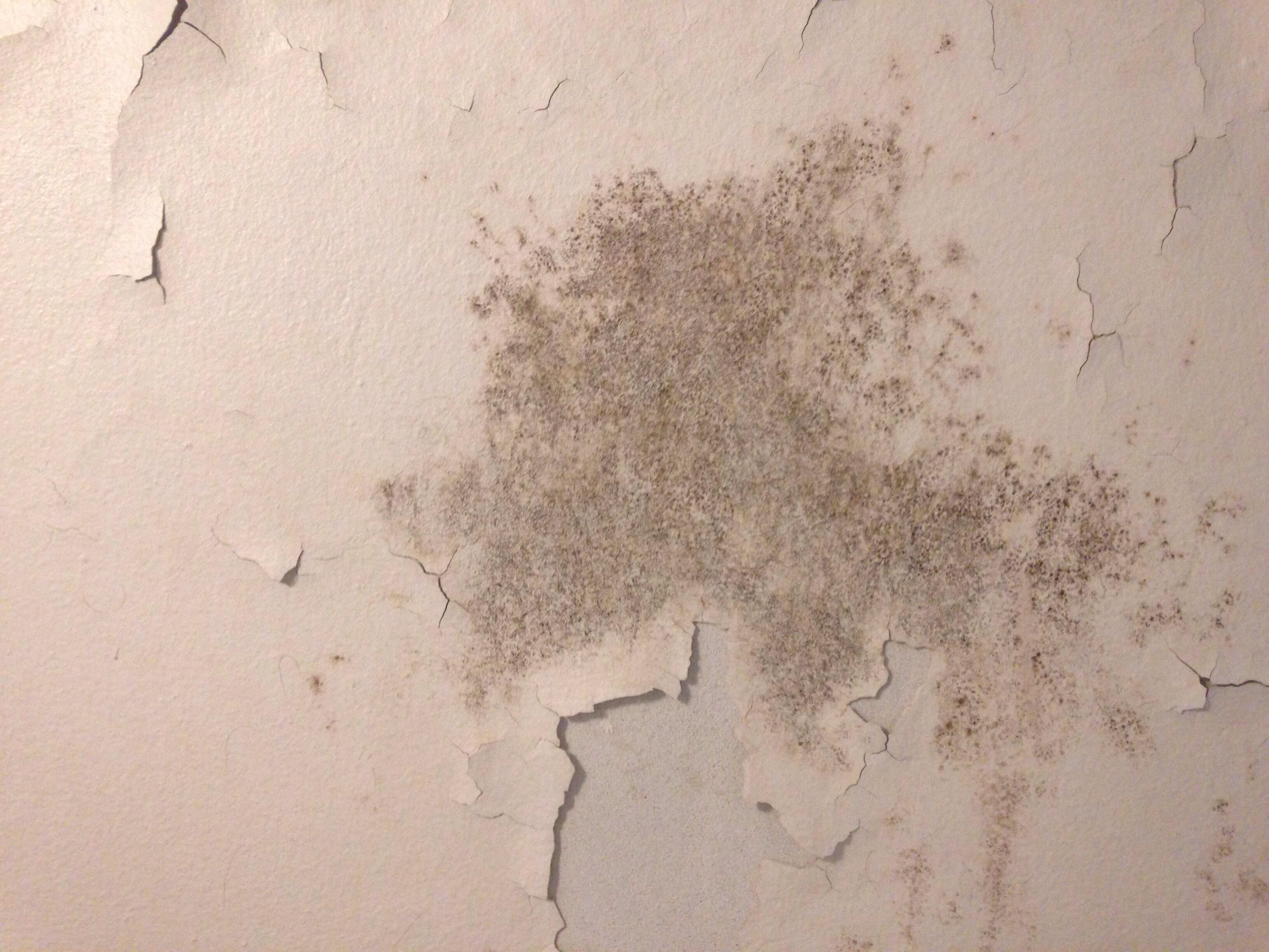 Gråsort plamage på hvidt loft med afskallende maling